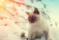 Katze, die auf dem Schnee sitzt Lizenzfreie Stockfotografie