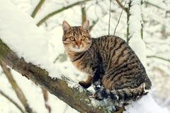Katze, die auf dem schneebedeckten Baum stationiert Stockfotos