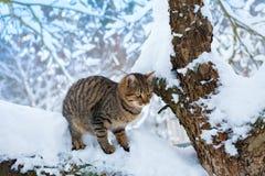 Katze, die auf dem schneebedeckten Baum stationiert Lizenzfreie Stockbilder