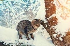Katze, die auf dem schneebedeckten Baum stationiert Lizenzfreie Stockfotos
