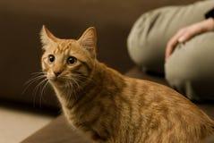 Katze, die auf dem Sofa sitzt Lizenzfreies Stockfoto