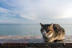 Katze, die auf dem Strand auf der Ufergegend sich aalt Stockfotografie