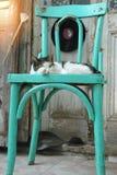 Katze, die auf dem Stuhl liegt Lizenzfreie Stockfotos