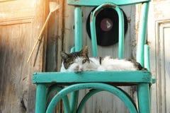 Katze, die auf dem Stuhl liegt Stockbild