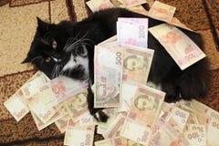 Katze, die auf dem Teppich mit ukrainischem Geld liegt Stockfoto