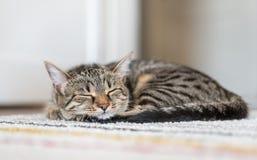 Katze, die auf dem Teppich schläft Stockfotos