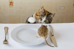 Katze, die auf dem Tisch mit kleiner Rennmausmaus mit Vorlegebesteck spielt Konzept des Opfers, Lebensmittel, Plage lizenzfreie stockbilder