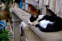 Katze, die auf dem Tisch schläft Lizenzfreies Stockbild
