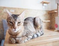 Katze, die auf dem Tisch sitzt Stockfotos