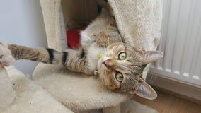 Katze, die auf dem Verkratzen des Beitrags spielt Lizenzfreies Stockfoto