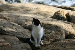 Katze, die auf den Felsen sitzt lizenzfreies stockbild