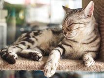 Katze, die auf den Regalen schläft Lizenzfreie Stockfotos