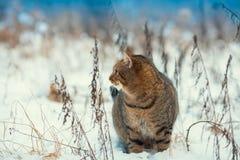 Katze, die auf den Schnee geht Lizenzfreie Stockbilder