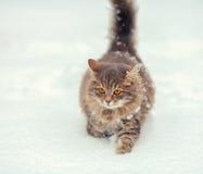 Katze, die auf den Schnee geht Lizenzfreie Stockfotos