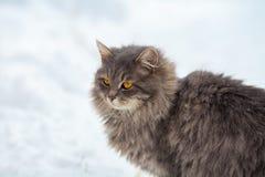 Katze, die auf den Schnee geht Stockfoto