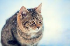 Katze, die auf den Schnee geht Lizenzfreie Stockfotografie