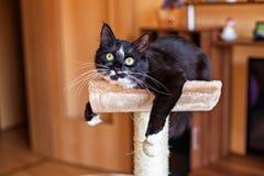 Katze, die auf den verkratzenden Beitrag legt Lizenzfreies Stockfoto