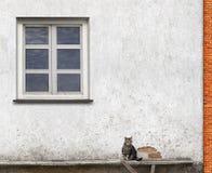 Katze, die auf der Bank sitzt Stockfoto