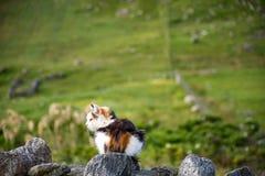Katze, die auf der Bruchsteinmauer, mit blühenden Landschaften im Hintergrund sitzt stockbild