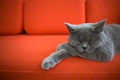 Katze, die auf der Couch sich entspannt. Lizenzfreie Stockbilder