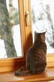 Katze, die auf der Fenster-Leiste betrachtet Snowy-Ansicht sitzt Stockbild