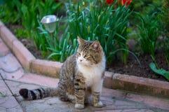 Katze, die auf der Fliese sitzt Lizenzfreie Stockbilder