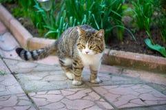 Katze, die auf der Fliese sitzt Stockfotografie