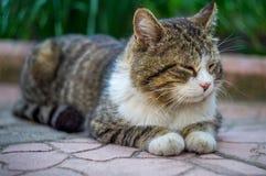Katze, die auf der Fliese sitzt Stockfotos
