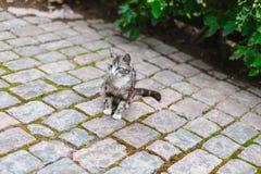 Katze, die auf der Pflasterung sitzt Lizenzfreie Stockfotografie