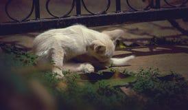 Katze, die auf der Straße auf einem Stein liegt Stockbilder