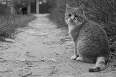 Katze, die auf der Straße sitzt Lizenzfreie Stockfotos