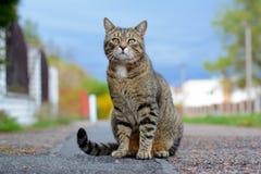 Katze, die auf der Straße sitzt Lizenzfreie Stockbilder