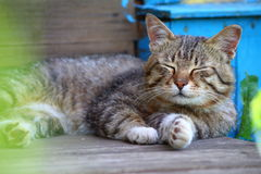 Katze, die auf der Türstufe sich aalt Lizenzfreie Stockbilder