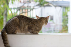 Katze, die auf der Wand, hintere Ansicht des Kopfes squating ist Stockbilder