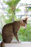 Katze, die auf der Wand squating ist Stockbild