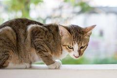 Katze, die auf der Wand squating ist Stockfotografie