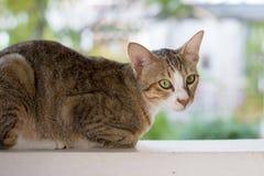 Katze, die auf der Wand squating ist Stockbilder