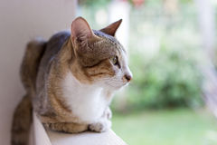 Katze, die auf der Wand squating ist Lizenzfreies Stockfoto