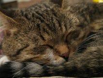 Katze, die auf die Ruinen der Backsteinmauer auf der Luft legt Stockbilder