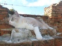 Katze, die auf die Ruinen der Backsteinmauer auf der Luft legt Lizenzfreie Stockfotos