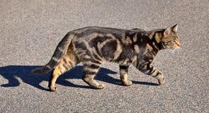 Katze, die auf die Straße geht Stockbilder