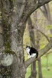Katze, die auf einem Baumast sitzt Lizenzfreie Stockfotos