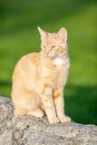 Katze, die auf einem Felsen sitzt Lizenzfreie Stockfotografie