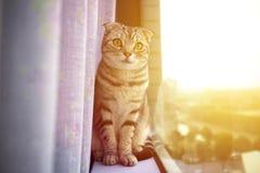 Katze, die auf einem Fenster mit Sonnenlichthintergrund sitzt Stockbild