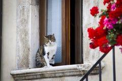 Katze, die auf einem Fenster stillsteht Lizenzfreie Stockfotos