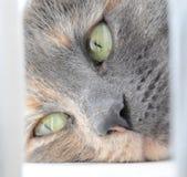 Katze, die auf einem Fensterrahmen liegt Stockfotografie