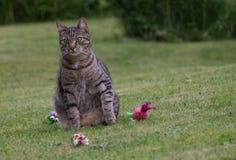 Katze, die auf einem Gras spielt lizenzfreie stockfotografie