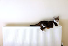 Katze, die auf einem Heizkörper liegt Stockfotografie