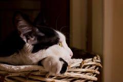 Katze, die auf einem Korb stillsteht Stockbild