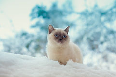 Katze, die auf einem Schnee sitzt Lizenzfreie Stockfotos